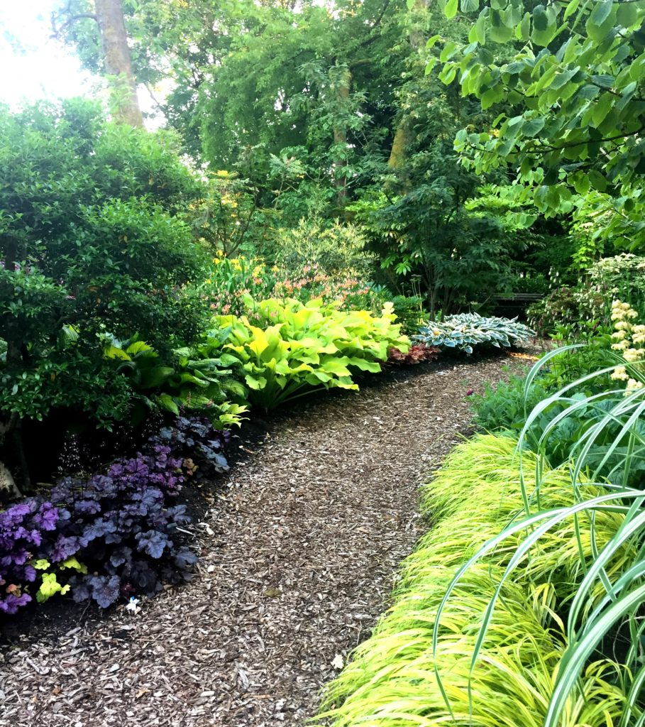Choice shade plants; Heuchera and Hakonechloa